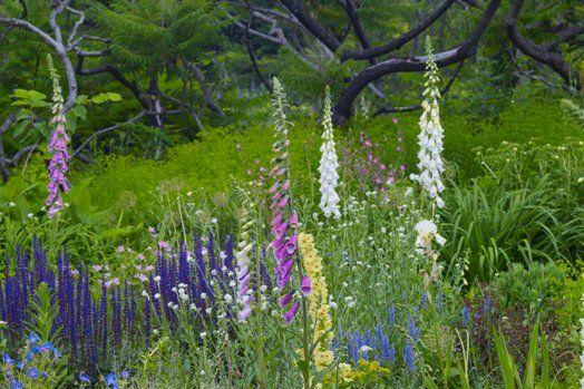 Wild Garden   The Gardens At Wave Hill || Wave Hill   New York Public