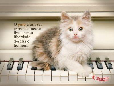 O gato é um ser essencialmente livre, e essa liberdade desafia o homem.