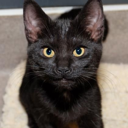 Regina is a goofy little kitten who is available for