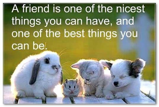 Friendship Quotes Children 9 | Her Quotes children friend quotes | Her  Quotes | Cute animals, Animal quotes, Animals