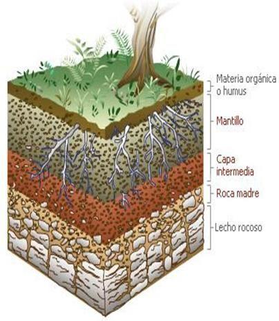 Guia De Estudio Edafologia Monografias Com Tipos De Suelo Formacion Del Suelo Tierra Para Plantas