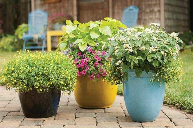 Cómo hacer un Jardín de macetas colorido y tener éxito ideas para - maceteros para jardin