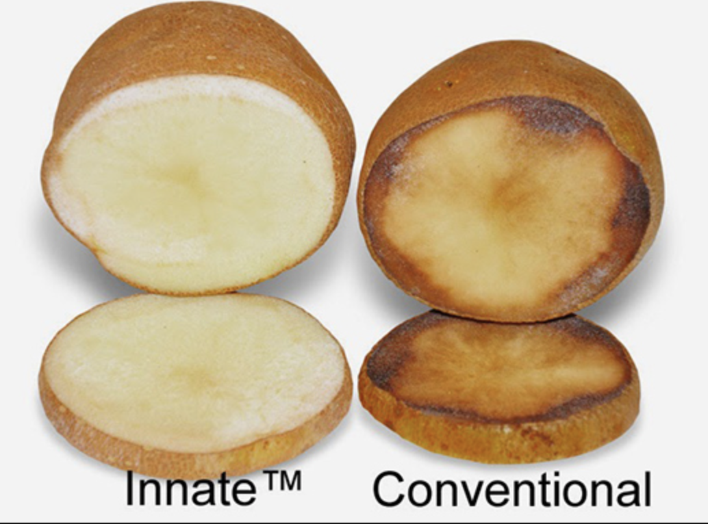 Organic farming should embrace blight–resistant GMO potato. Under law it may not technically qualify as GMO (only certain kinds of genetic modification are considered GMO), meaning organic farmers can legally grow them. This would help organic farmers reduce waste. Growing blight-resistant GMO potatoes can cut down on the need for fungicides (currently used heavily). Organic farmers often use copper-based fungicides which may cause health problems, and selects for copper-resistant pathogens.