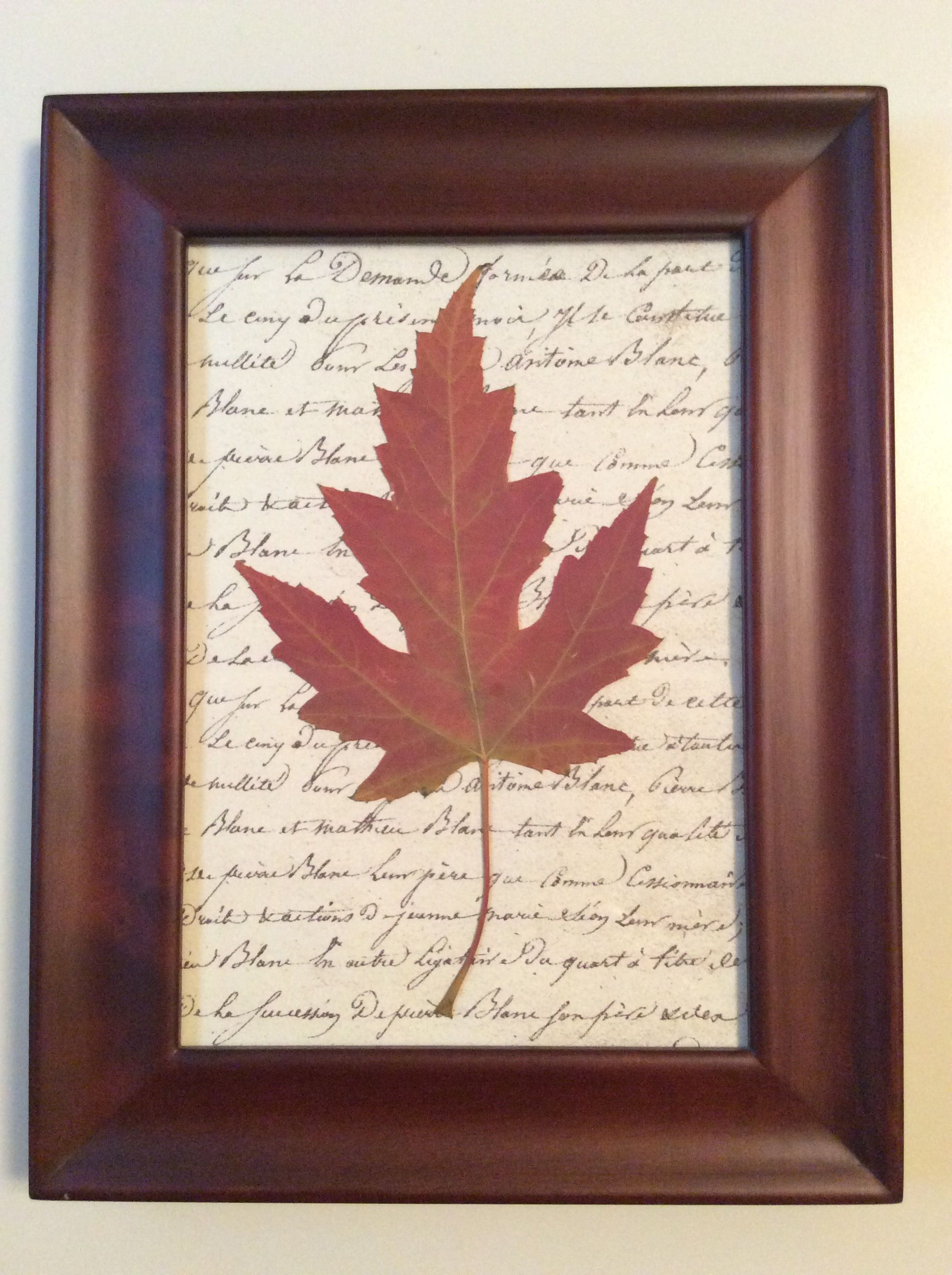 Simple Wood Frame, Pressed Maple Leaf On Graphic Wrapping Paper