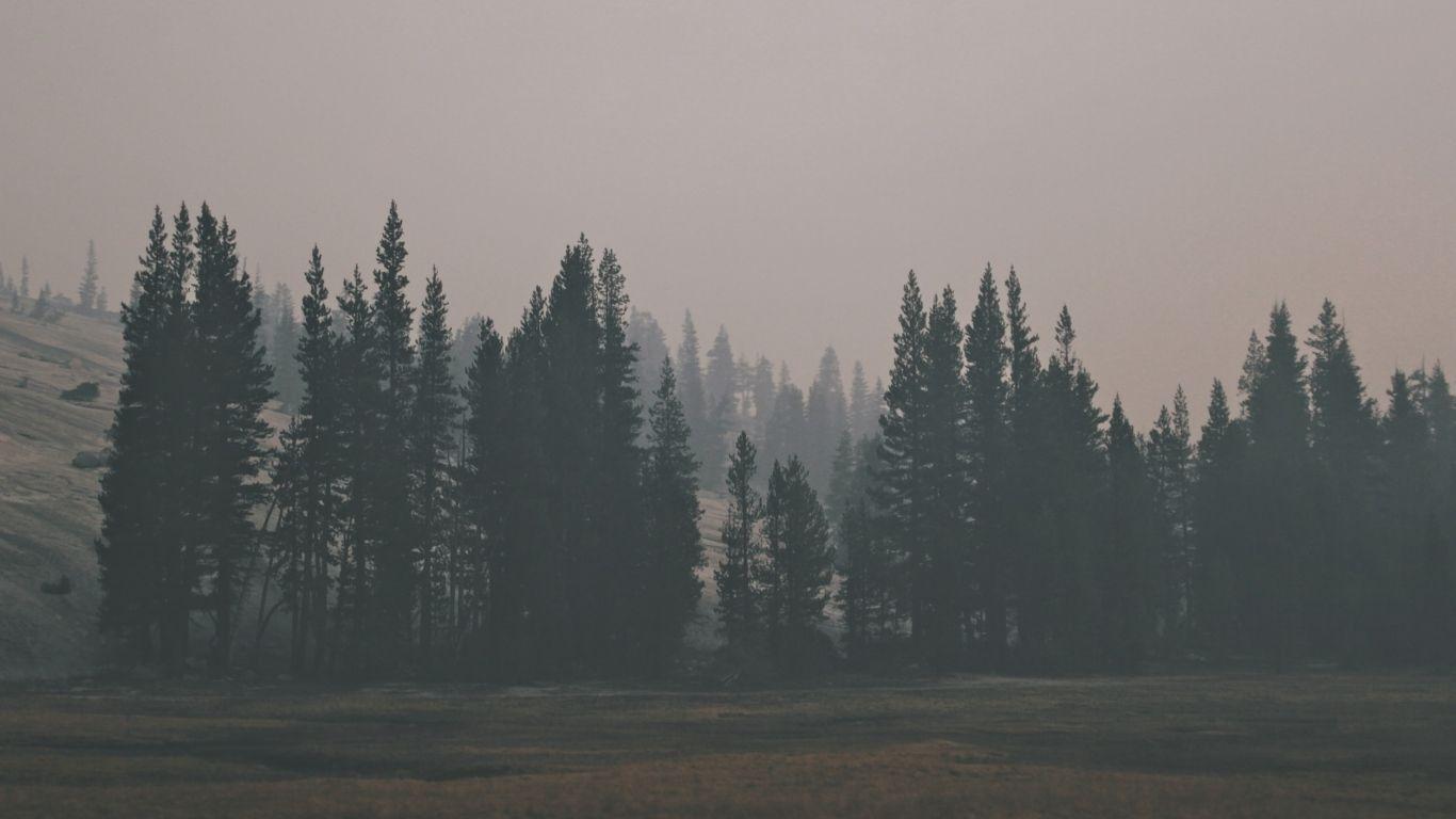 1366x768 Wallpaper Forest Hill Fog Ideias Fotografia