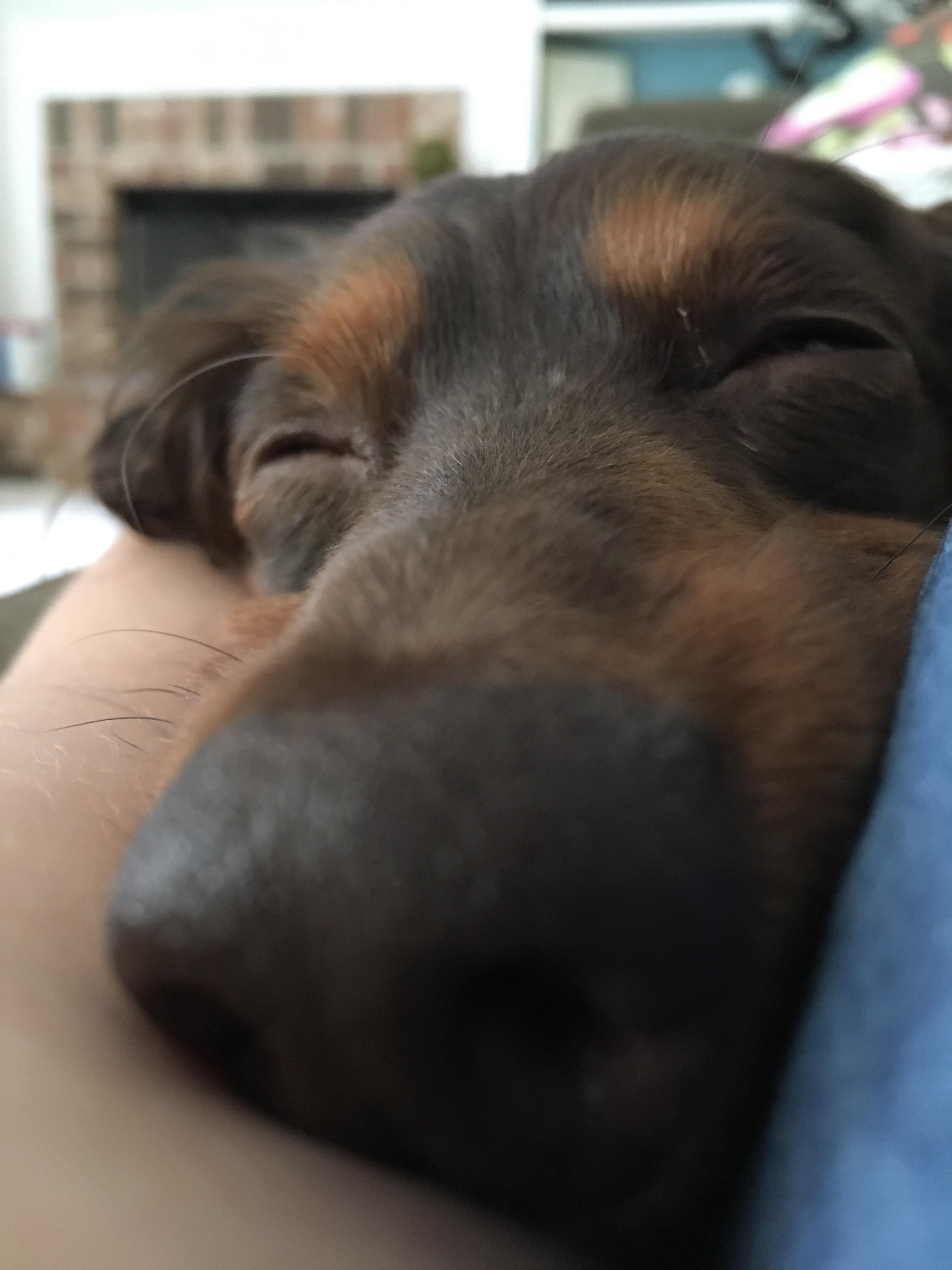 The cutest pupper iftrtqcs cute uc pinterest the