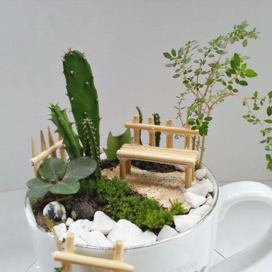 Craft a cup of mini garden diy do it yourself pinterest gardens craft a cup of mini garden solutioingenieria Gallery