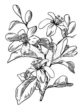 flowers and branch are separate groups all fills and outlines are