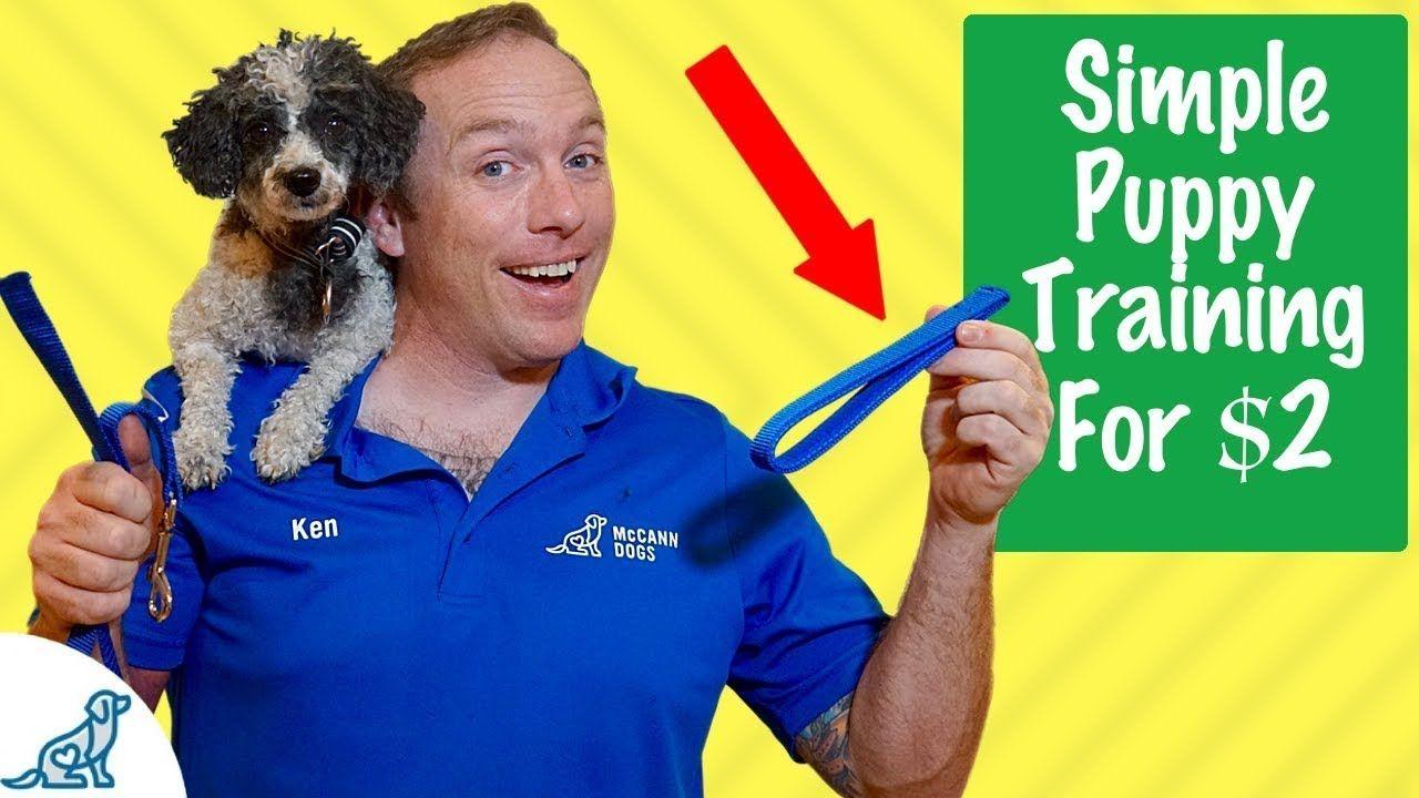 Puppy Training Basics Simple 2 Puppy Training Tricks