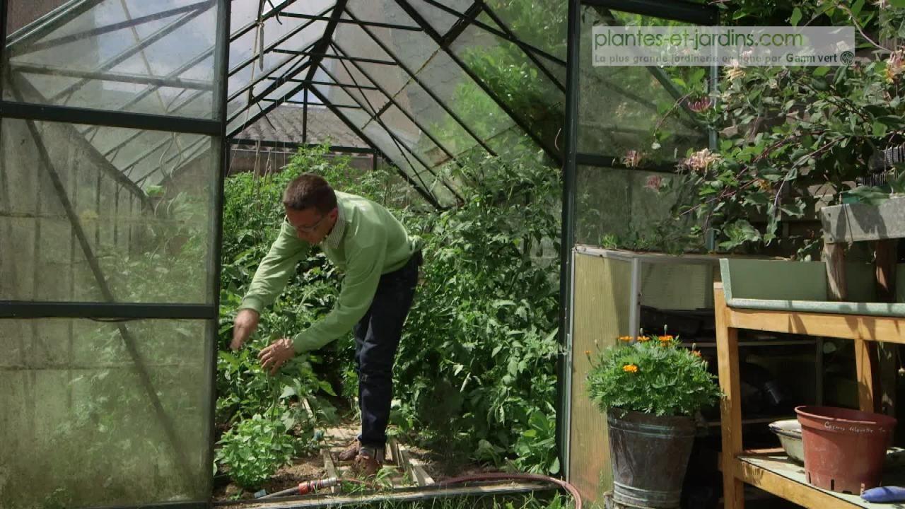 Cultiver des légumes sous serre Cultiver, Jardinage, Serre