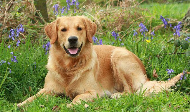 The Top Ten Dog Breeds That Are Children Friendly Quiet Dog