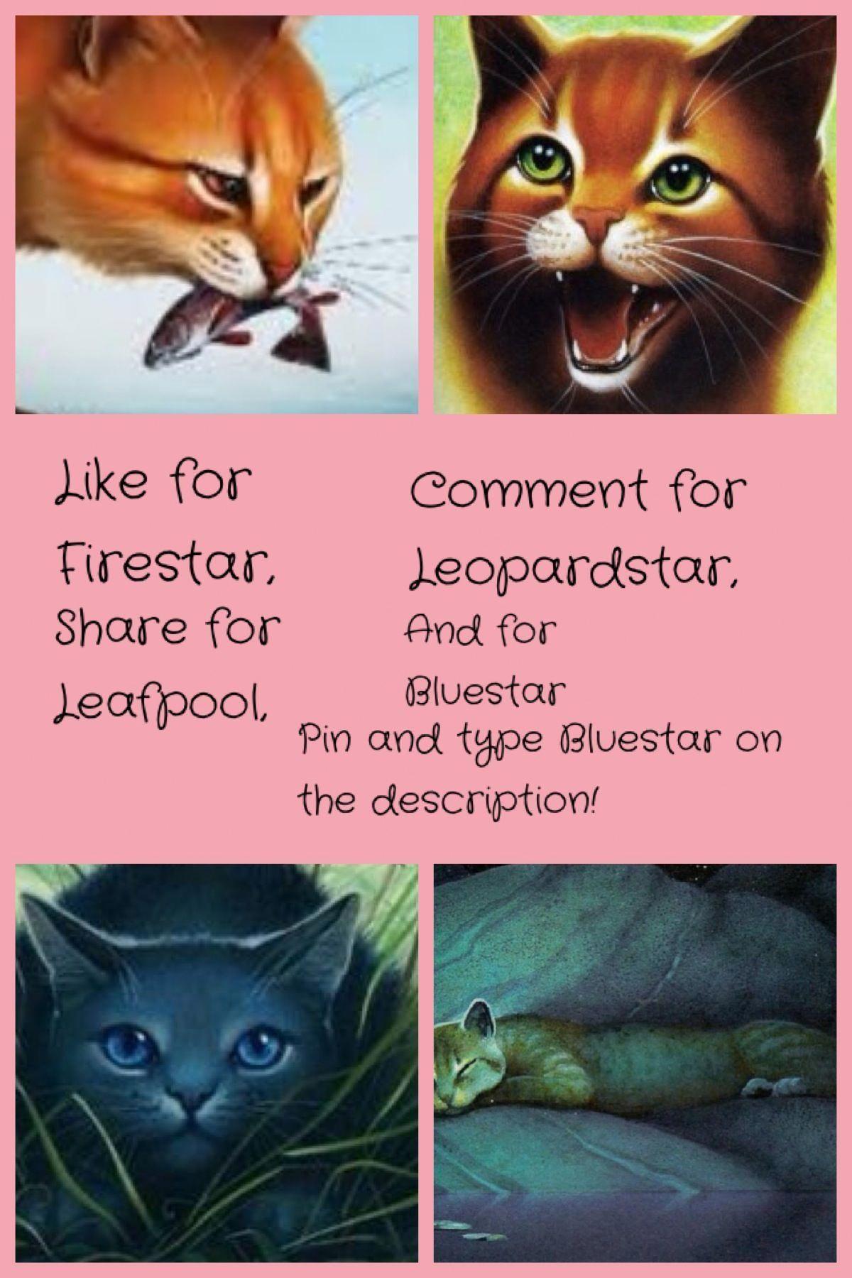 CatsSayingHeyKey 6523074187 WarriorCats Warrior cats
