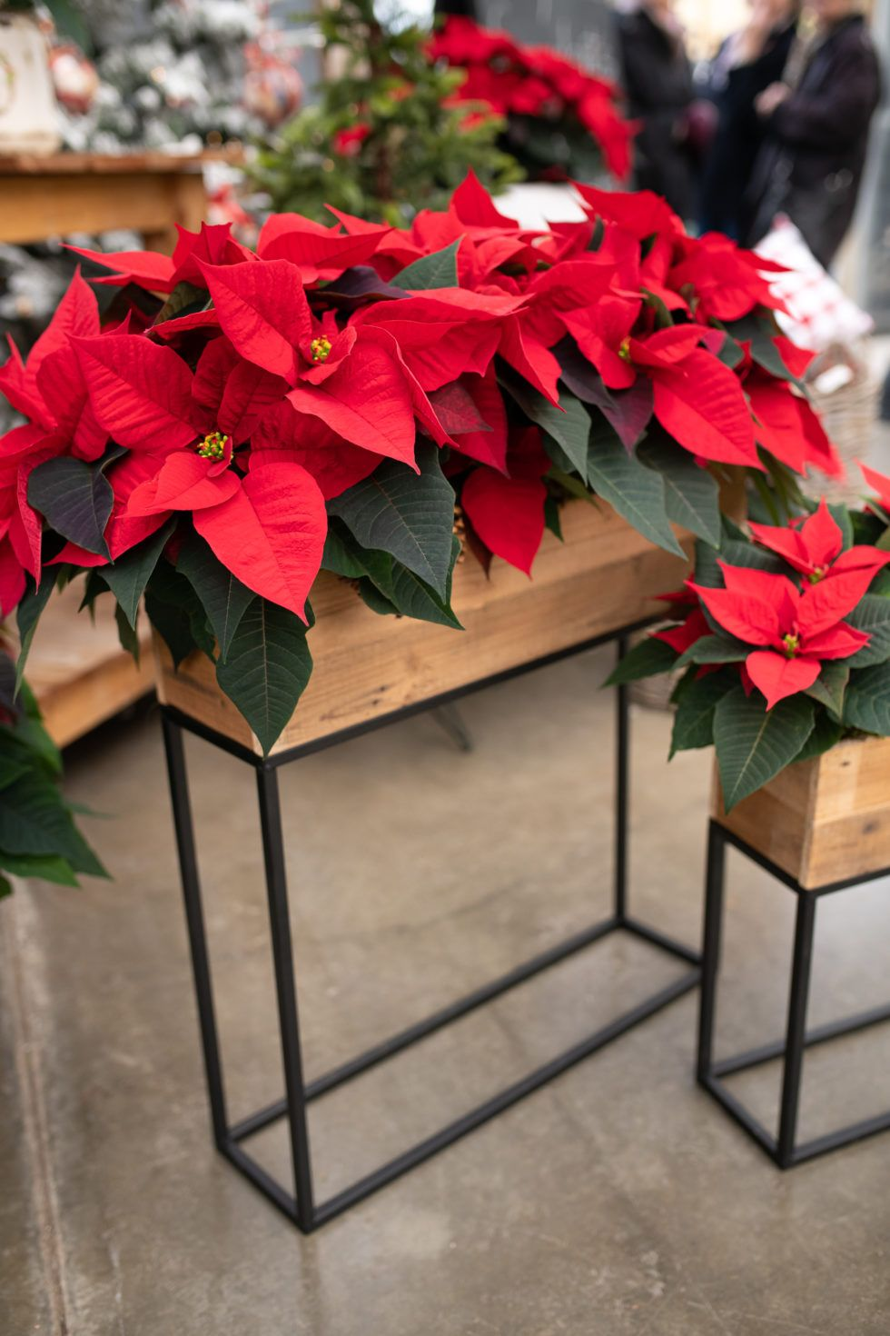 The Royal Christmas Welcome Christmas Indoor Planters Indoor Plants Floral New In Store Winter West Coast Gardens Red Christmas Decor Wooden Planter Boxes Rustic Box
