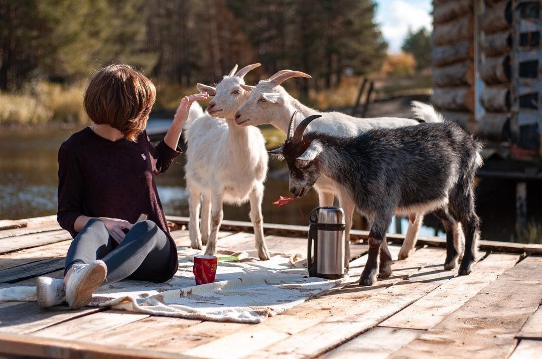 особенность коза на фотосессию красных