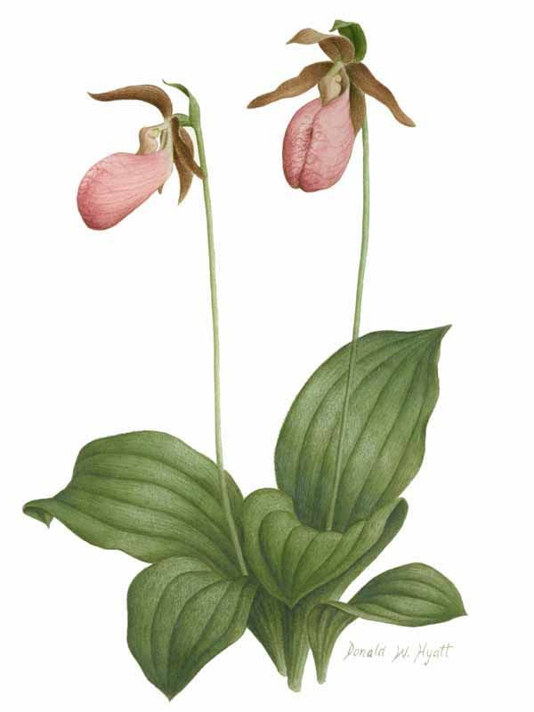 February Flower Tattoo