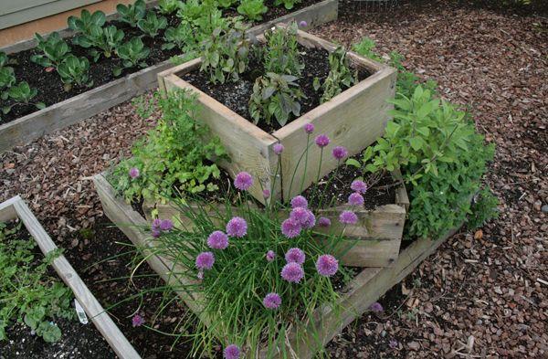 17 Best images about Herb garden – Herb Garden Plants
