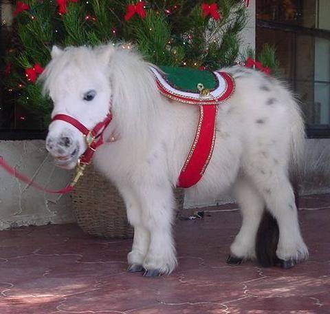 Midget with a poney