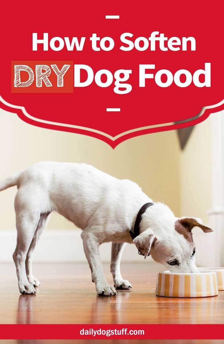 How to soften dry dog food for seniors dogs with bad