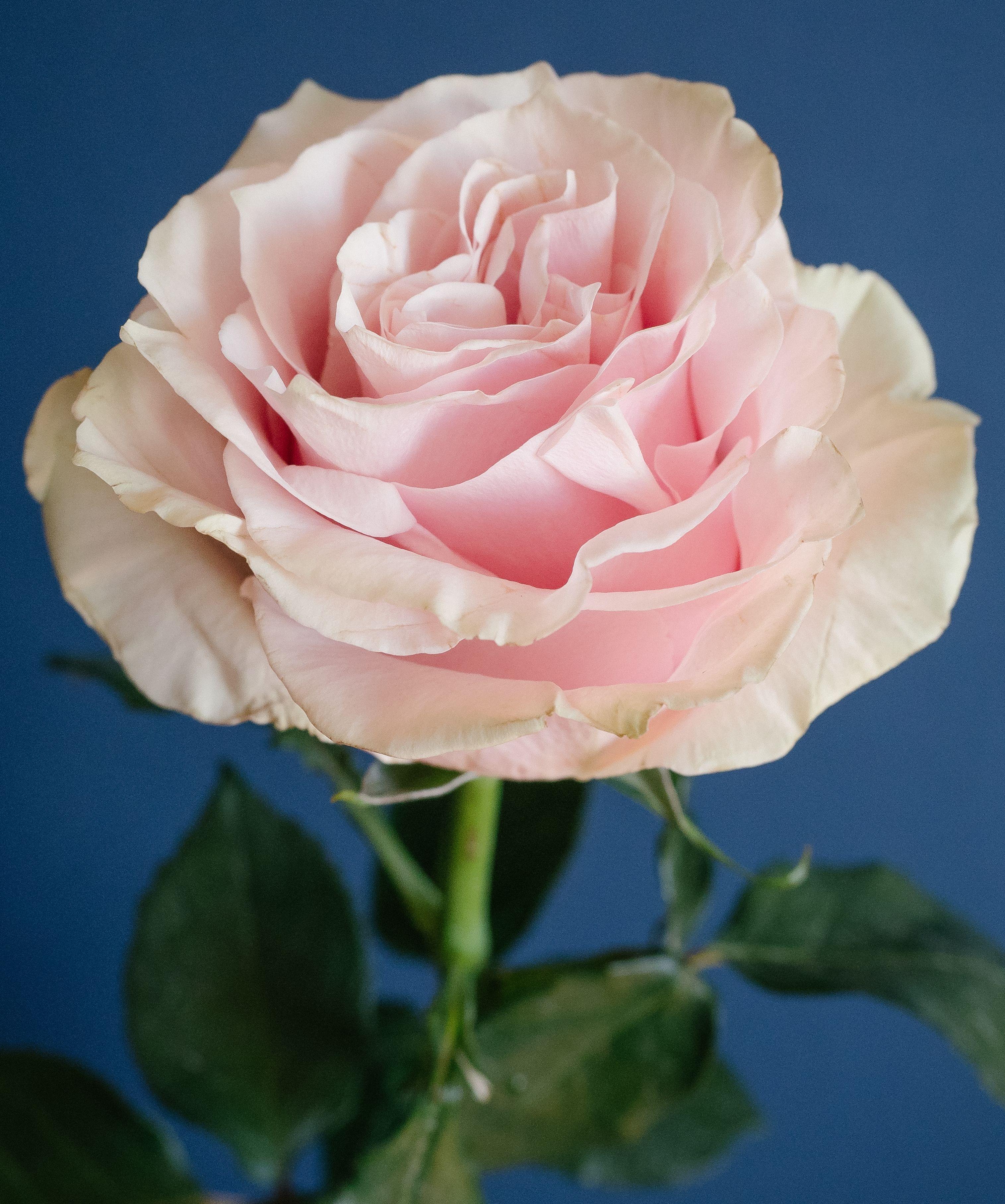 Wedding Flowers With Names: Rose Varieties, Types Of