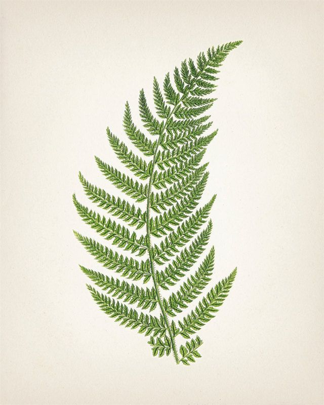 Green Fern 2 8x10 Fine art print of a by ThePrintedVintage