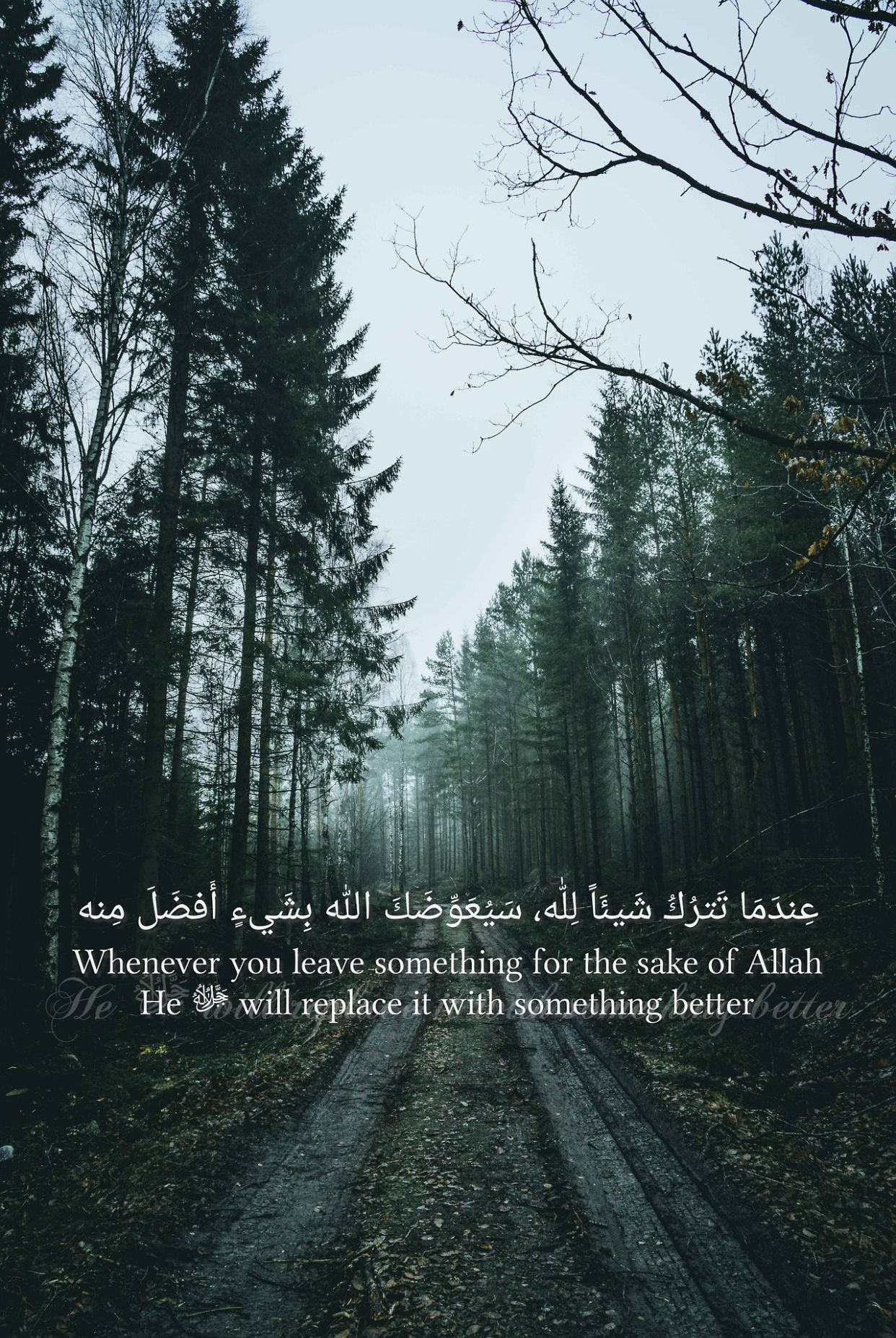 Pin By Fahad Baloch On Quran Verses Islamic Quotes Forest