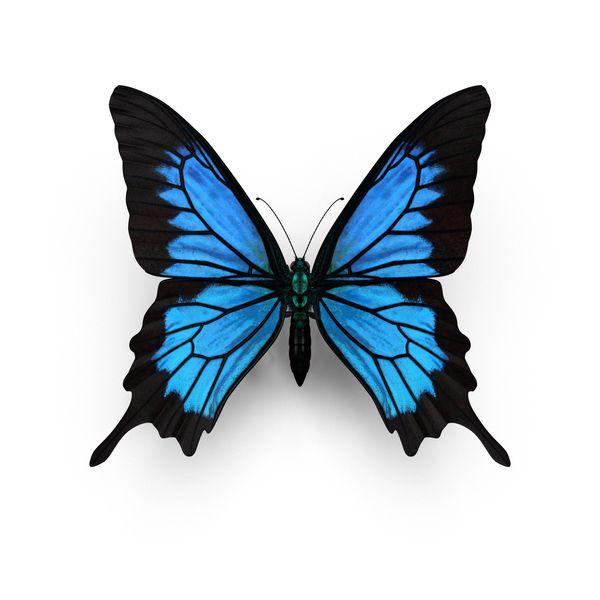 Photo of Objet de Papilio Ulysses Butterfly disponible au téléchargement en PNG ou PSD sur Pixe …