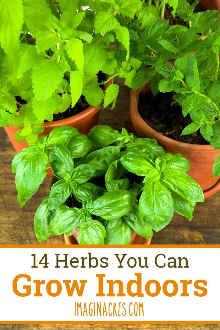 14 Culinary Herbs For Your Indoor Herb Garden With Images 400 x 300