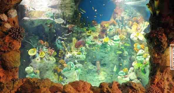 دليل لايفوتك فقيه اكواريوم احد المزارات الترفيهية التي افتتحت مؤخرا في جده لايفوتك قضاء عطلتك القادمة في زيار Aquarium