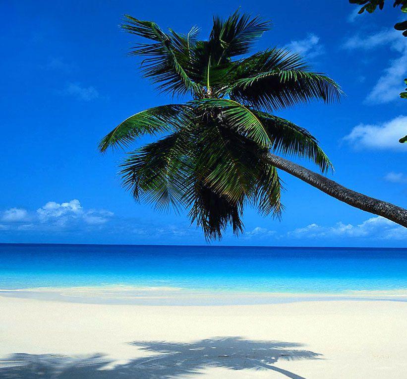 Palm Tree Beach: Palm Tree On Tropical Beach
