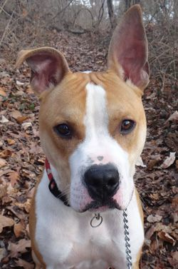 This week in Shelter Spotlight - SPCA of Anne Arundel County.