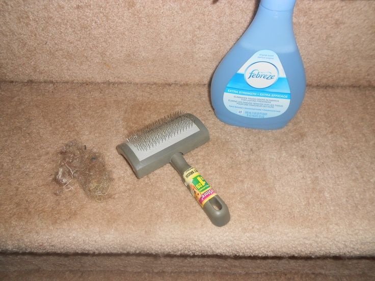 How to remove animal fur from carpet stairs. I randomly