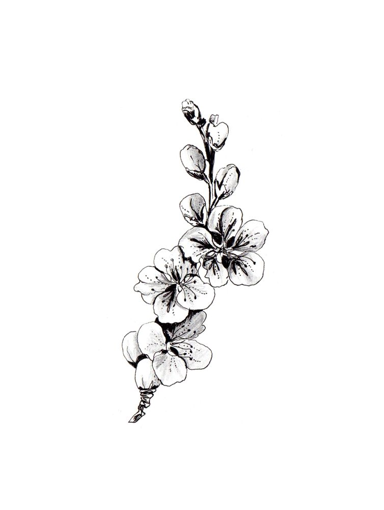 Cherry Blossom Drawing Art Print By Anis Illustration Anisillustration X Small Blossom Tattoo Black And White Flower Tattoo Cherry Blossom Drawing