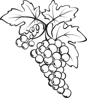 Bunch Of Grapes Coloring Page Fruit Illustration Grape Decor