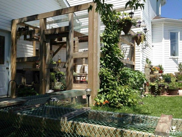 How to build a catio for your cat   Cat, Pet stuff and Cat houses