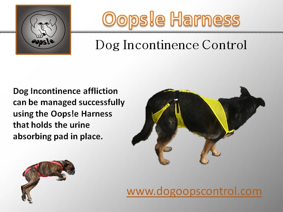 Buckle Up The Dog Diaper Dogs Dog Incontinence