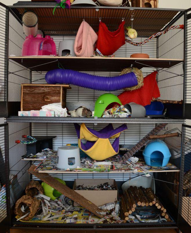 Savic Suite Royal Xl Pet Rat Cages Pet Cage Small Pets