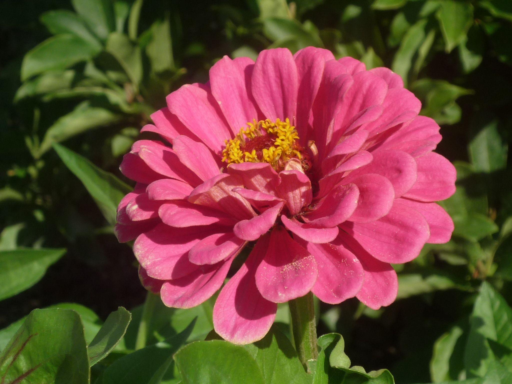 Schöne Blume