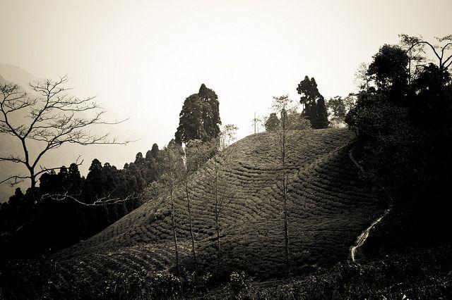 Tea Tasting in Darjeeling - 64 by Stéphane Barbery, via Flickr