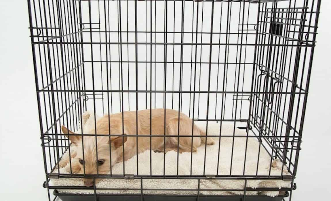 Help How Do I Stop My Dog From Crying In The Crate With Images Dog Crying Dog Crate Dog Whining