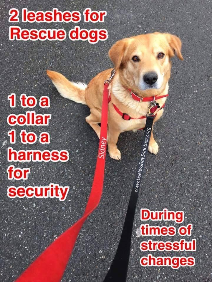 If You Adopt Or Rescue A Dog Take Extra Safety Measures At Least The First Month In Times Of High Stress During A Move A New Losing A Dog Losing A