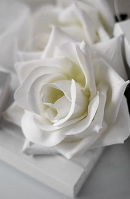 The whitest romance of flowers pinterest rose flowers in the love language of flowers white roses mean heavenly and eternal love rev ese are the ones who come out of the great tribulation mightylinksfo