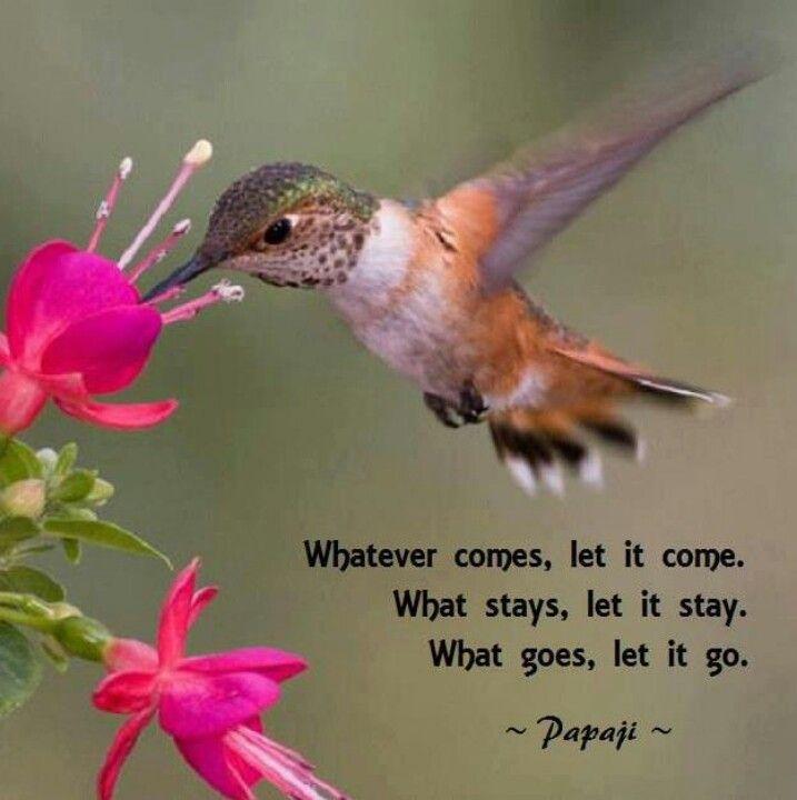 humming bird Bird quotes