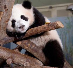Po @ Zoo Atlanta