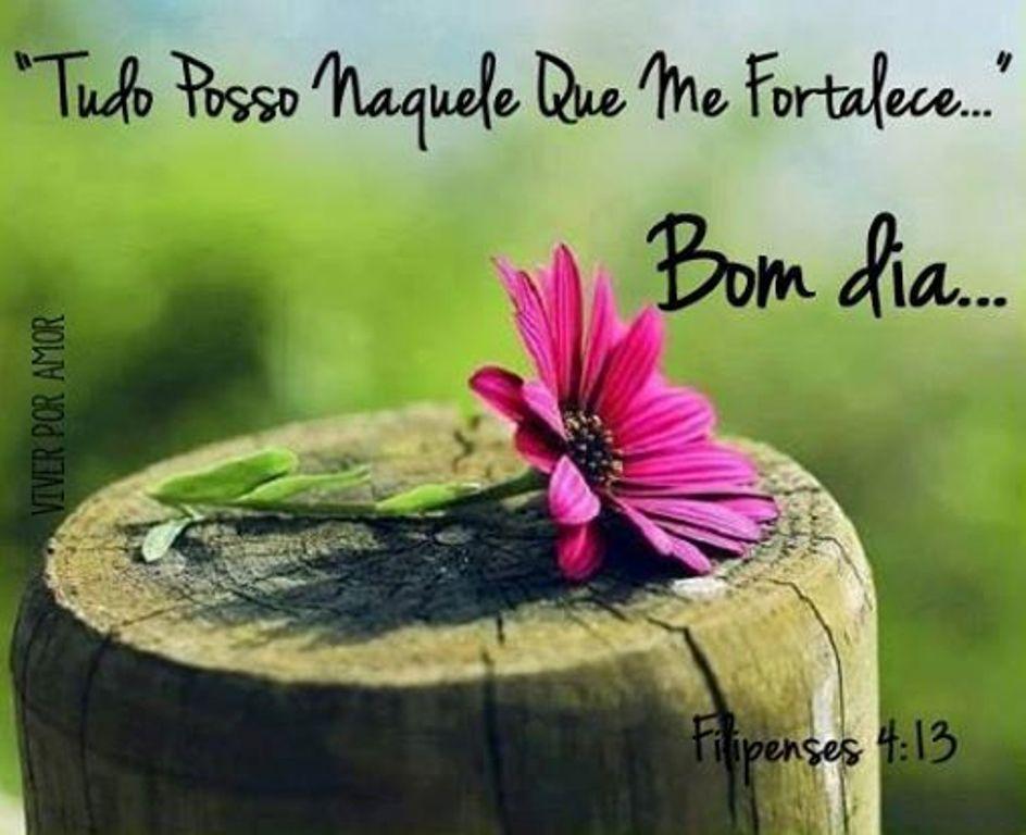 Uma Flor De Bom Dia: SAUDAÇÕES DO DIA E DA NOITE