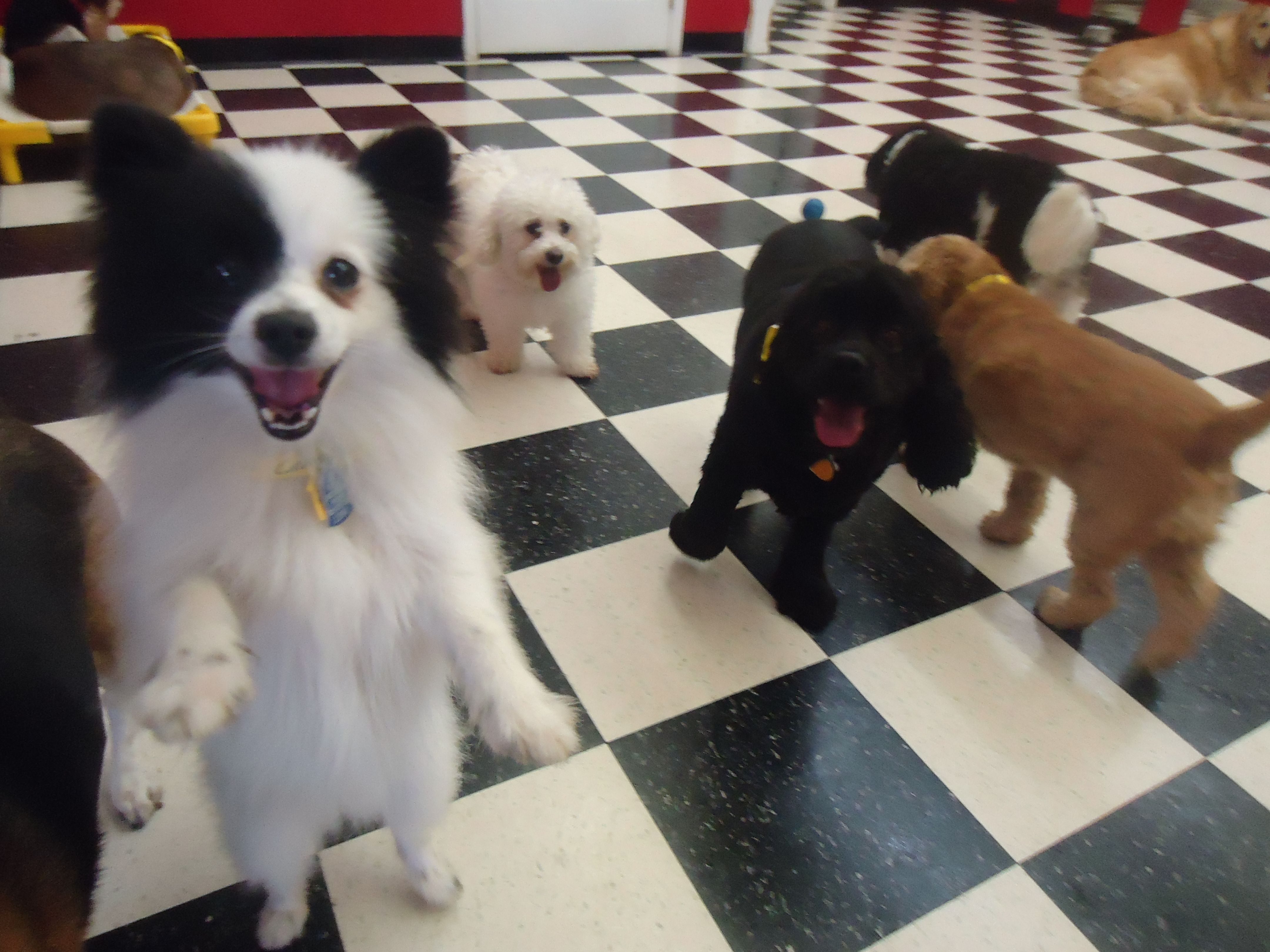 Small Dog Daycare Room