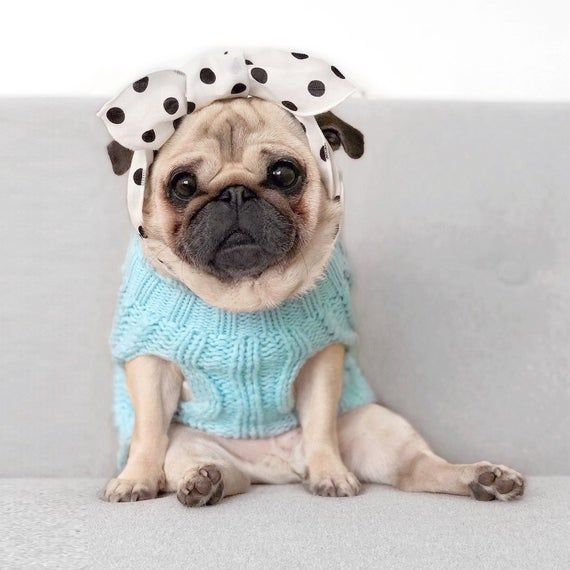 Baby Blue: Sleeveless Knitted Dog Jumper