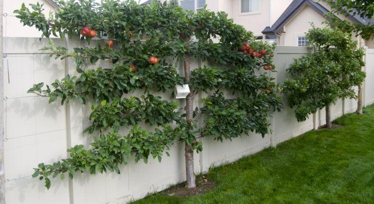 Berühmt spalierobst-garten-apfelbaum-schnitt-holz-zaun-weiss | Garten @GG_19