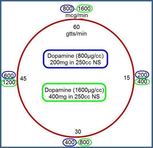 Dopamine Clock 5 Mcg Kg Min Multiply 5 By Pt Weight Kg