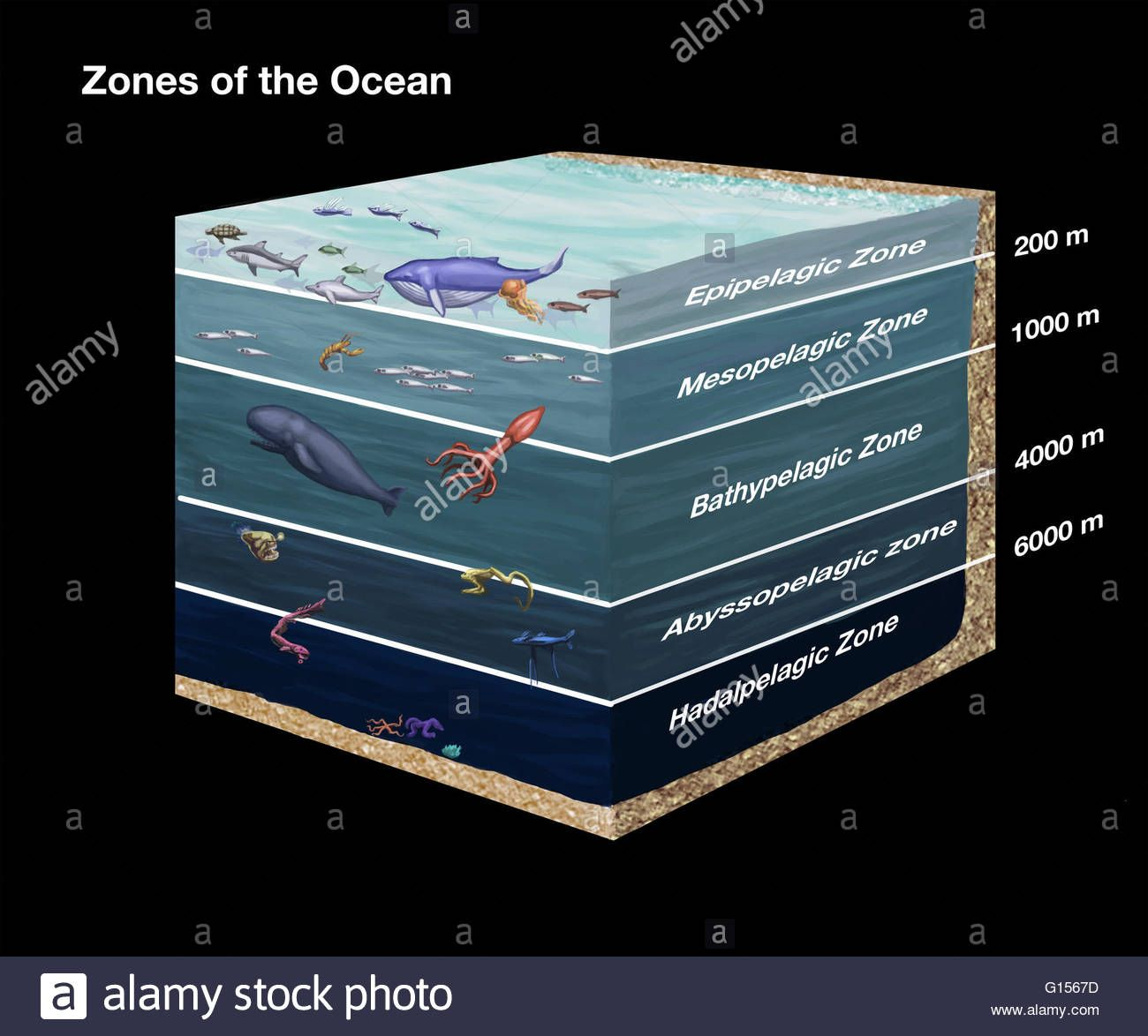 Image Result For Ocean Layers Diagram