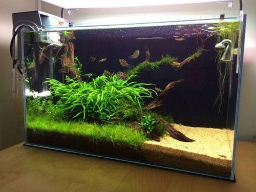 nature aquarium tumblr underwater garden aquarium. Black Bedroom Furniture Sets. Home Design Ideas